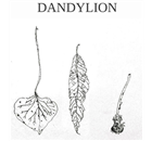 Dandylion Restaurant - Logo